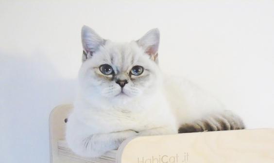 Foto gattino sulla mensola