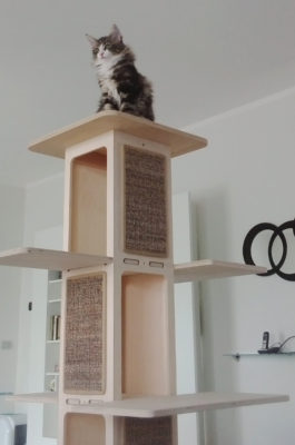 Palestra Towercat