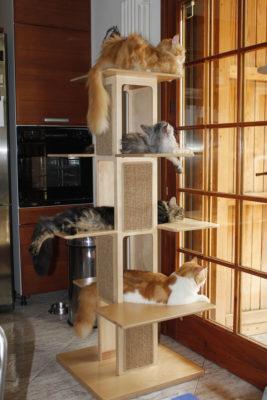 Palestra Towercat
