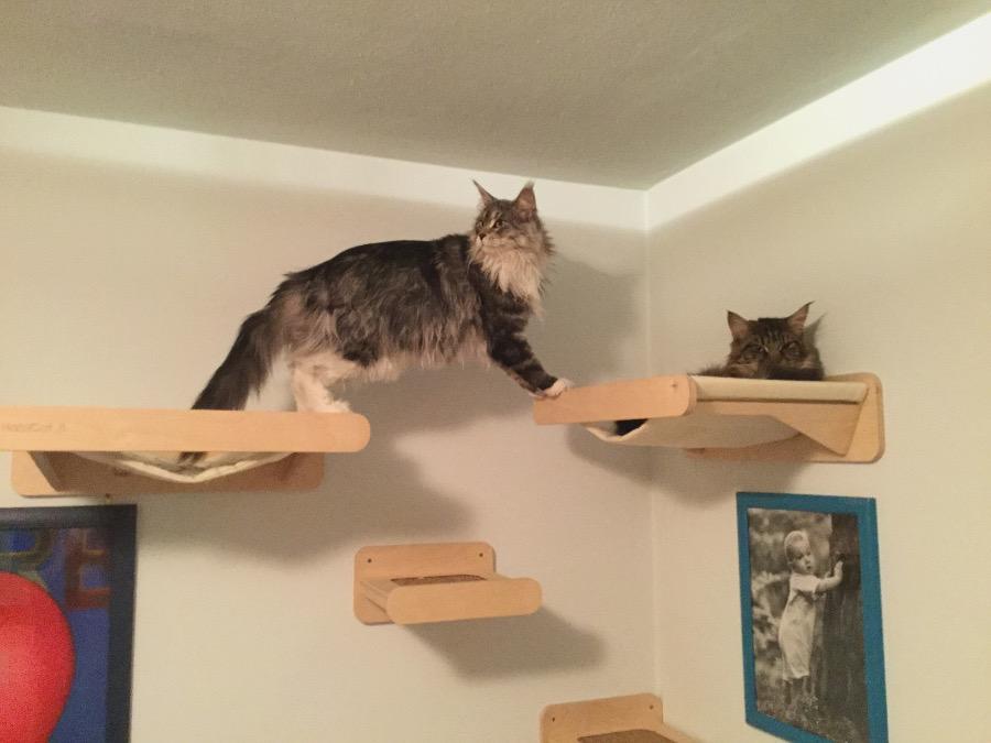 Mensole a muro per gatti awesome mensole da parete for Mensole per gatti ikea