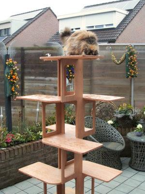 Cattus outdoor